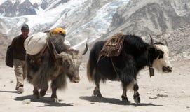 Yaks and Nepalese people near Gorak shep village Stock Photos