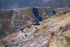 Yaks on Niubei mountain Royalty Free Stock Photo