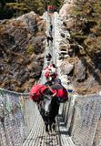 Yaks and people on hanging suspension bridge Royalty Free Stock Images