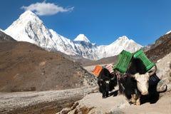 Yaks on the way to Everest base camp and mount Pumo Ri. Khumbu valley, Sagarmatha national park, Nepal stock photos