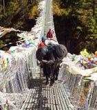 Yaks zaludniają na linowym wiszącym zawieszenie moście zdjęcia royalty free