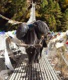 Yaks zaludniają na linowym wiszącym zawieszenie moście zdjęcia stock