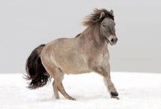 Yakut Pony auf Schnee Stockbild