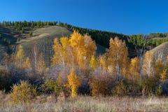 Yakutia de herfstlandschap met de bomen en de bergen van het berkbosje royalty-vrije stock afbeeldingen