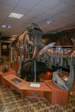 Interior of the national museum of Yakutsk. Skeleton of mammoth in the museum. royalty free stock photos