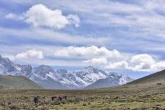 Yala jokul och grässlättlandskap Arkivfoton