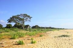 Yala landscape 2 Stock Photo