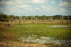 Yala Nationaal Park in Sri Lanka Royalty-vrije Stock Foto