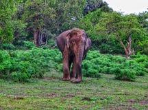Yala nationaal park voor het wild in Sri Lanka royalty-vrije stock afbeeldingen