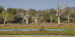 Yala National Park Stock Photos