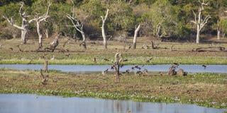 Yala National Park. Birds, Nature and landscape in Yala National Park Royalty Free Stock Photo