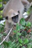 Yala national park,Sri Lanka Royalty Free Stock Photos
