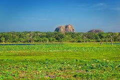 Yala National Park, Sri Lanka, Asia. Beautiful road, lake and old trees. Forest in Sri Lanka, Big stone rock in the background. Summer day in wilderness stock photos