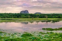 Yala National Park, Sri Lanka Stock Image