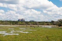 Yala national park in Sri Lanka Stock Photography