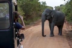 Yala nationalpark i sydliga Sri Lanka Arkivfoto