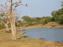 Yala park in Sri-Lanka Royalty Free Stock Photo