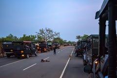 YALA, SRI LANKA - EM DEZEMBRO DE 2016: Nacional de Yala Fotografia de Stock Royalty Free