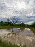 Yale nationaal park in Sri Lanka stock foto
