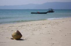 Yalong bay Beach. A coconut on Yalong bay Beach in Sanya Stock Images