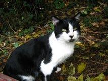 Yalta cat Stock Photo