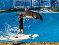 yalta Toon met dolfijnen Stock Afbeeldingen