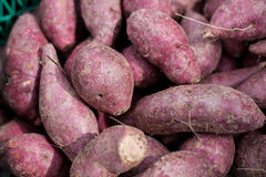 yam Images stock