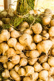 Yam bean Stock Photos