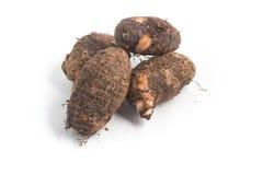 Yam, Inhame, Cara. Colocasia esculenta Royalty Free Stock Photos