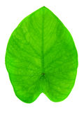 Yam leaf. Macro full length isolated on white Royalty Free Stock Images