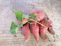 Yam or Sweet potato with left. stock photography