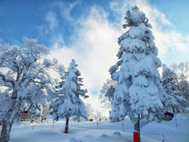 Yamagata frozen trees snow monsters and ski slope at mt.zao. Japan royalty free stock photos