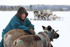 Yamal半岛的男性驯鹿牧民在冬天reindee附近的 库存图片