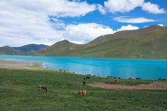 Yamdrok sjö Arkivbilder