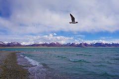 Yamdrok Yumtso sjö, Tibet royaltyfria foton