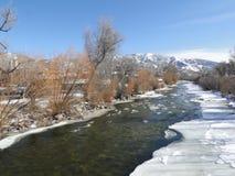 Yampa-Fluss mit Eis und Pappeln im Winter, Stockfoto