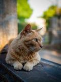 Yanaka, Τόκιο - 13 Μαΐου 2014 - περιπλανώμενη γάτα στο νεκροταφείο Yanaka Στοκ εικόνες με δικαίωμα ελεύθερης χρήσης