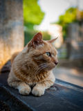 Stray cat in Tokyo. Stray cat sitting on a grave in Yanaka graveyard in Tokyo.  Yanaka is well known in Japan for its population of stray cats which tend to be Royalty Free Stock Images