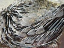 Yang dove wing Stock Photo