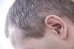 Yang mężczyzna, widzieć od behind, w głowie zaczyna być stary wcześnie popielaty włosy w mężczyzna obraz stock