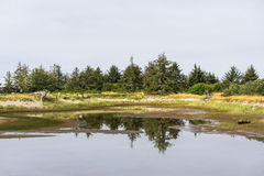 Yang spruce forest reflection in the small puddle. Yang spruce forest reflection in the small puddle Stock Image