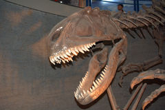 Yangchuanosaurus shangyuensis, Beijing, China Royalty Free Stock Photos