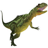 Yangchuanosaurus on White. Yangchuanosaurus was a theropod dinosaur that lived in China during the Late Jurassic Era Stock Photography