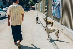 Yangon, το Μιανμάρ - 19 Φεβρουαρίου 2014: Οι άνθρωποι και τα σκυλιά περπατούν επάνω Στοκ Εικόνες