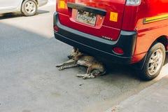 Yangon Myanmar - FEBRUARI 19th 2014: Hunden sover under en bil på Royaltyfria Bilder