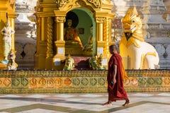 Yangon, Myanmar, o 9 de novembro de 2015: Uma monge que anda para rezar no th Fotos de Stock Royalty Free