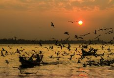 Yangon river sunset Royalty Free Stock Images