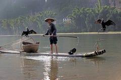 YANGSHUO - 18 DE JUNIO: Pesca china del hombre con los pájaros de los cormoranes Fotografía de archivo libre de regalías