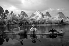 YANGSHUO - 18 DE JUNIO: Pesca china del hombre con los pájaros de los cormoranes Imagenes de archivo