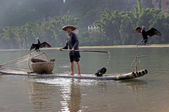 YANGSHUO - JUNE 18: Chinese man fishing with cormorants birds Royalty Free Stock Photography